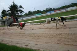 Greyhound Race Cork