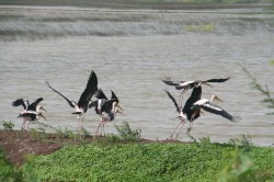 csc-birds