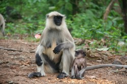 csc-monkey